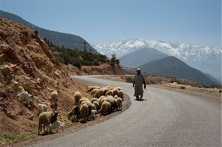 A local man herding sheep on a road with the snow capped Atlas Mountains in the background, Morocco, North Africa, Africa Stock Photo - Rights-Managed, Code: 841-06445522