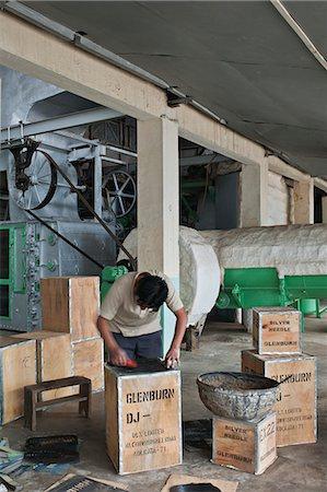 Glenburn Tea Factory, near Darjeeling, West Bengal, India, Asia Stock Photo - Rights-Managed, Code: 841-06445627