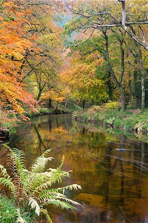 dartmoor national park - Beautiful autumnal colours line the banks of the River Teign at Fingle Bridge, Dartmoor National Park, Devon, England, United Kingdom, Europe Stock Photo - Rights-Managed, Code: 841-06447513