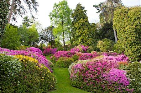 Azaleas in spring bloom, gardens of Villa Carlotta, Tremezzo, Lake Como, Lombardy, Italian Lakes, Italy, Europe Stock Photo - Rights-Managed, Code: 841-06448497