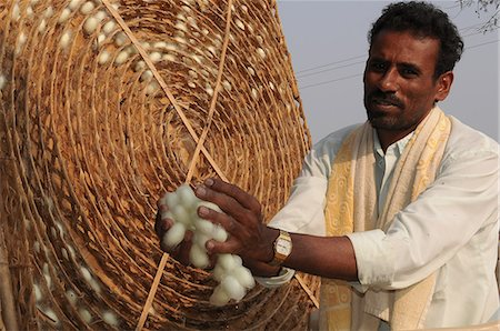 silk - Silk farmer with cocoons, Kanakpura, Karnataka, India, Asia Stock Photo - Rights-Managed, Code: 841-06499737