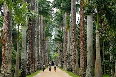 south american woman - Jardim Botanico (Botanical Gardens), Rio de Janeiro, Brazil, South America Stock Photo - Rights-Managed, Code: 841-06500397