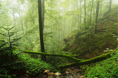 Black Forest in fog, near Wehr, Baden-Wurttemberg, Germany, Europe Stock Photo - Rights-Managed, Code: 841-06500564