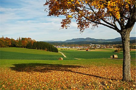 fall - Rural autumn scene with Lauffen village, near Villingen-Schwenningen, Black Forest, Schwarzwald-Baar, Baden-Wurttemberg, Germany, Europe Stock Photo - Rights-Managed, Code: 841-06500603