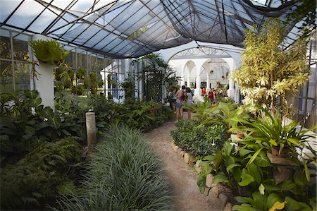 People inside orchid house at Botanical Gardens (Jardim Botanico), Rio de Janeiro, Brazil, South America Stock Photo - Rights-Managed, Code: 841-06501509