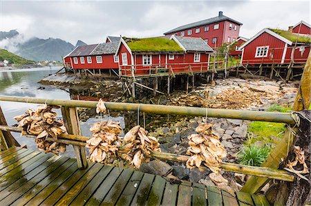 Norwegian cod fishing town of Reine, Lofoton Islands, Norway, Scandinavia, Europe Stock Photo - Rights-Managed, Code: 841-06805120