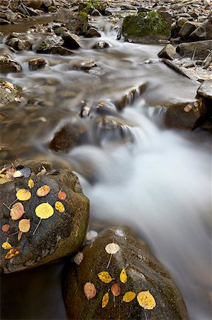 stream - Cascades on the Big Bear Creek in the fall, San Miguel County, Colorado, United States of America, North America Stock Photo - Rights-Managed, Code: 841-06806381