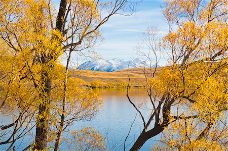 fall trees lake - Snow capped mountains and autumn trees, Lake Alexandrina, Canterbury Region, South Island, New Zealand, Pacific Stock Photo - Rights-Managed, Code: 841-07080565