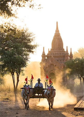 Bullock cart on a dusty track among the temples of Bagan with light from the setting sun shining through the dust, Bagan, Myanmar (Burma), Southeast Asia Stock Photo - Rights-Managed, Code: 841-07081617