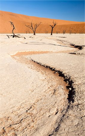 Dried mud pan with ancient camelthorn trees and orange sand dunes in the distance, Dead Vlei, Namib Desert, Namib Naukluft Park, Namibia, Africa Stock Photo - Rights-Managed, Code: 841-07081707