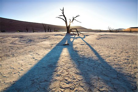 Dead camelthorn trees said to be centuries old in silhouette at sunset in the dried mud pan at Dead Vlei, Namib Desert, Namib Naukluft Park, Namibia, Africa Stock Photo - Rights-Managed, Code: 841-07081714