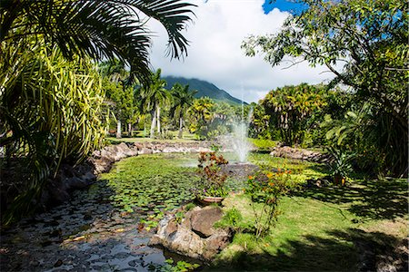 Botanical Gardens on Nevis Island, St. Kitts and Nevis, Leeward Islands, West Indies, Caribbean, Central America Stock Photo - Rights-Managed, Code: 841-07083390