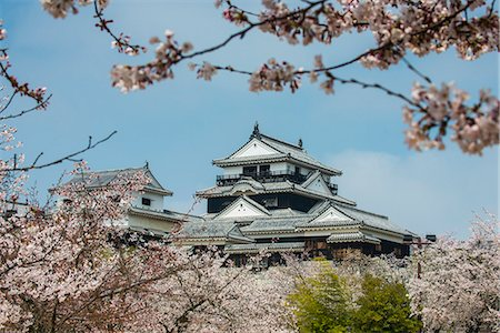 Cherry blossom in the Matsuyama Castle, Shikoku, Japan, Asia Stock Photo - Rights-Managed, Code: 841-07083650