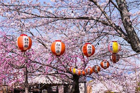 Cherry blossom in the Maruyama-Koen park, Unesco world heritage sight Kyoto, Japan Stock Photo - Rights-Managed, Code: 841-07083707