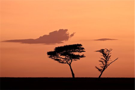 serengeti national park - Two acacia trees at dawn, Serengeti National Park, UNESCO World Heritage Site, Tanzania, East Africa, Africa Stock Photo - Rights-Managed, Code: 841-07205508