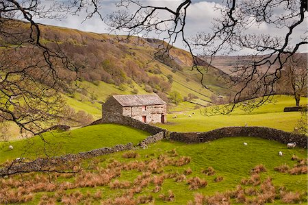 Stone barn in the Swaledale area of the Yorkshire Dales National Park, Yorkshire, England, United Kingdom, Europe Stock Photo - Rights-Managed, Code: 841-07206521