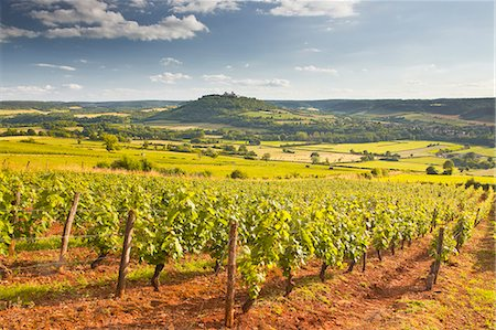 Vineyards near to the Beaux Village de France of Vezelay in the Yonne area, Burgundy, France, Europe Stock Photo - Rights-Managed, Code: 841-07206545