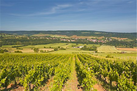 Vineyards above the village of Asquin in the Yonne area of Burgundy, France, Europe Stock Photo - Rights-Managed, Code: 841-07206549