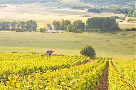 Champagne vineyards in the Cote des Bar area of Aube, Champagne-Ardennes, France, Europe Stock Photo - Rights-Managed, Code: 841-07206579