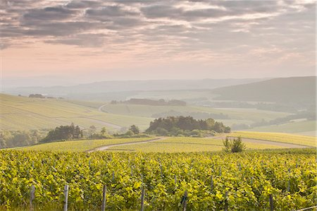 Champagne vineyards in the Cote des Bar area of the Aube department near to Les Riceys, Champagne-Ardennes, France, Europe Stock Photo - Rights-Managed, Code: 841-07206580