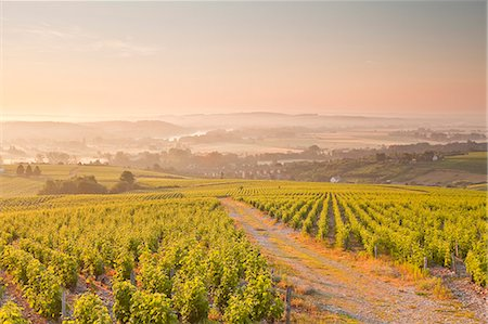 The vineyards of Sancerre in the Loire Valley, Cher, Centre, France, Europe Stock Photo - Rights-Managed, Code: 841-07202644