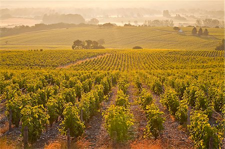 The vineyards of Sancerre in the Loire Valley, Cher, Centre, France, Europe Stock Photo - Rights-Managed, Code: 841-07202645