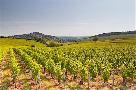 The vineyards of Sancerre in the Loire Valley, Cher, Centre, France, Europe Stock Photo - Rights-Managed, Code: 841-07202652