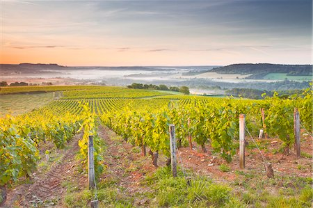 Vineyards near to Vezelay during a misty dawn, Burgundy, France, Europe Stock Photo - Rights-Managed, Code: 841-07202653