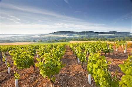 france - Vineyards below the hilltop village of Vezelay in Burgundy, France, Europe Stock Photo - Rights-Managed, Code: 841-07202660
