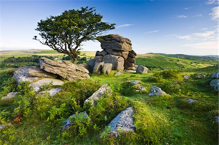 dartmoor national park - Summer at Saddle Tor in Dartmoor National Park, Devon, England, United Kingdom, Europe Stock Photo - Rights-Managed, Code: 841-07355117