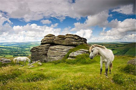 dartmoor national park - Ponies graze in the summer sunshine beside Chinkwell Tor in Dartmoor National Park, Devon, England, United Kingdom, Europe Stock Photo - Rights-Managed, Code: 841-07355119