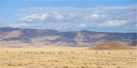 A large herd of Gemsbok (Oryx gazella) on the plains of the NamibRand Nature Reserve, Namib Desert, Namibia, Africa Stock Photo - Rights-Managed, Code: 841-07457878