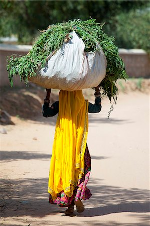 farmhand (female) - Indian woman villager working at farm smallholding carrying animal feed at Sawai Madhopur near Ranthambore in Rajasthan, India Stock Photo - Rights-Managed, Code: 841-07540436