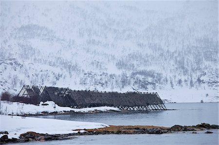 Stockfish cod drying on traditional racks, hjell, on foreshore in the Arctic Circle on Ringvassoya Island, Tromso, Northern Norway Stock Photo - Rights-Managed, Code: 841-07540701