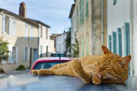 Ginger cat resting on hot tin roof at St Martin de Re, Ile de Re, France Stock Photo - Rights-Managed, Code: 841-07540908