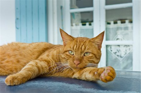 pictures cats - Ginger cat resting on hot tin roof at St Martin de Re, Ile de Re, France Stock Photo - Rights-Managed, Code: 841-07540909