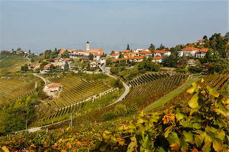 View over Treiso village and vineyards, Langhe, Cuneo district, Piedmont, Italy, Europe Stock Photo - Rights-Managed, Code: 841-07590129