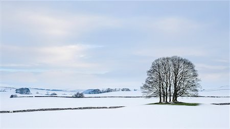 A small copse of trees in the winter snow near Malham, Yorkshire Dales, Yorkshire, England, United Kingdom, Europe Stock Photo - Rights-Managed, Code: 841-07590539