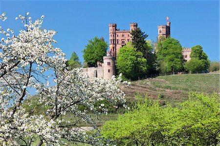 Cherry blossom, Ortenberg Castle, near Offenburg, Ortenau Region, Black Forest, Baden Wurttemberg, Germany, Europe Stock Photo - Rights-Managed, Code: 841-07653122