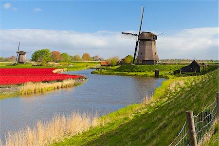 Windmills and tulip field near Schermerhorn, North Holland, Netherlands, Europe Stock Photo - Rights-Managed, Code: 841-07813753