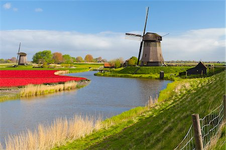 Windmills and tulip field near Schermerhorn, North Holland, Netherlands, Europe Stock Photo - Rights-Managed, Code: 841-07813753