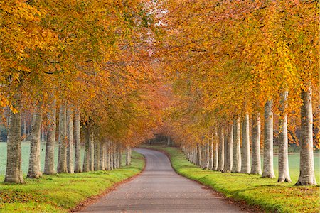 rustique - Avenue of colourful trees in autumn, Dorset, England, United Kingdom, Europe Photographie de stock - Rights-Managed, Code: 841-08031464