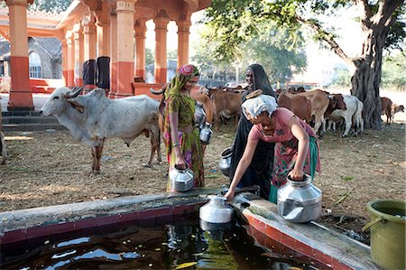 Women filling water pots in the BAPS Swaminarayan Sanstha cattle camp where drought affected cattle are fed and watered, Gondal, Gujarat, India, Asia Stock Photo - Rights-Managed, Code: 841-08149670