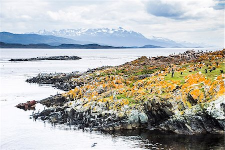 Cormorant colony on an island at Ushuaia in the Beagle Channel (Beagle Strait), Tierra Del Fuego, Argentina, South America Stock Photo - Rights-Managed, Code: 841-08421110