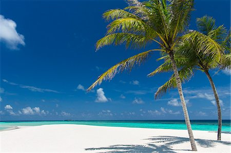 palm - Palm trees and tropical beach, Maldives, Indian Ocean, Asia Stock Photo - Rights-Managed, Code: 841-08421450