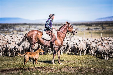 people in argentina - Gauchos riding horses to round up sheep, El Chalten, Patagonia, Argentina, South America Stock Photo - Rights-Managed, Code: 841-08438515
