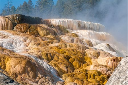Mammoth Hot Springs terraces, Yellowstone National Park, UNESCO World Heritage Site, Wyoming, United States of America, North America Stock Photo - Rights-Managed, Code: 841-08438742
