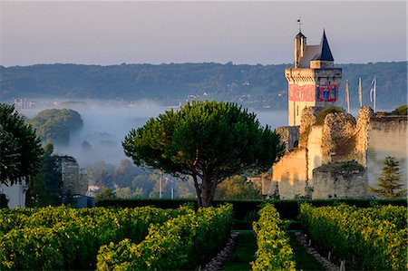 Castle of Chinon among the vineyards, UNESCO World Heritage Site, Chinon, Indre et Loire, Centre, France, Europe Stock Photo - Rights-Managed, Code: 841-08568922