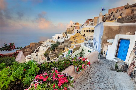 Bougainvillea flowers and typical houses on the Aegean Sea at sunrise, Oia, Santorini,  Cyclades, Greek Islands, Greece, Europe Stock Photo - Rights-Managed, Code: 841-08645313