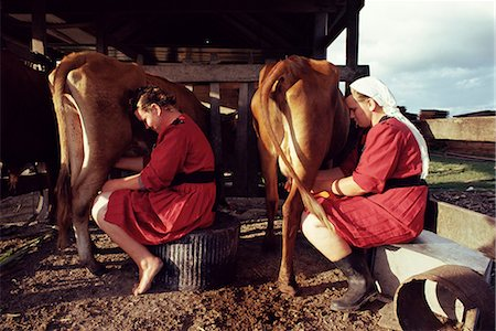 Traditional Mennonite girls miling cows, Camp 9, Shipyard, Belize, Central America Stock Photo - Rights-Managed, Code: 841-02709589